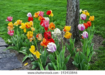 bright flower meadow spring tulips in city park - stock photo