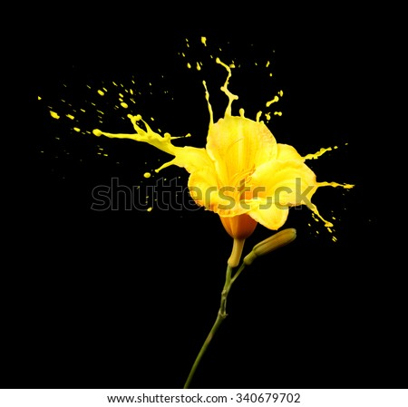 bright flower with yellow splashes on black background - stock photo