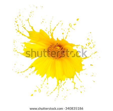 bright flower with yellow splashes on white background - stock photo