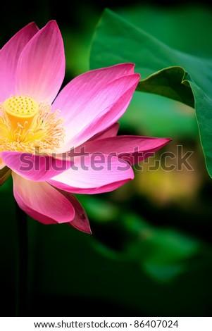 Bright flowers - stock photo