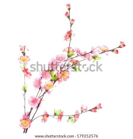 Bright flowers on the white background - stock photo