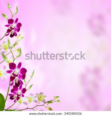 Bright frame made of beautiful purple orchid flowers with space for text