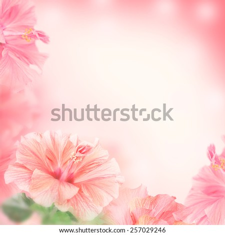 Bright frame made of Hibiscus flowers with space for text - stock photo