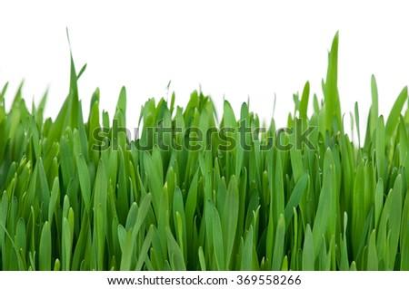 Bright fresh green grass over white background - stock photo