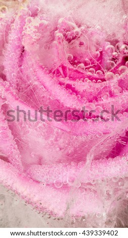 Bright frozen abstraction with bright pink rose, frozen in clear water with air bubbles