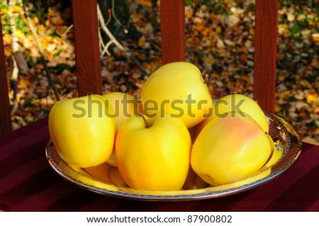 Bright golden delicious apples in an autumn setting - stock photo