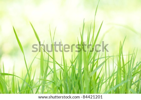 Bright grass at sunny morning meadow - stock photo
