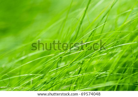 Bright grass background - stock photo