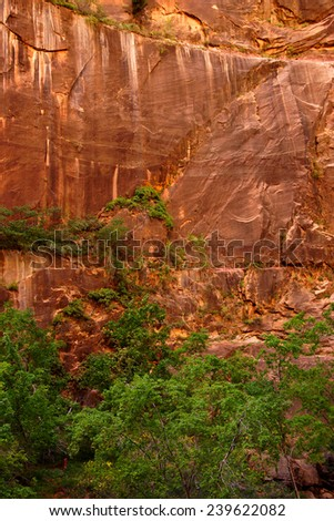 Bright green cottonwoods against red sandstone cliffs along the Virgin RiverZion National Park,  Utah - stock photo