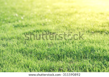 Bright Green grass background texture - stock photo