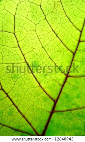 bright green leaf - stock photo