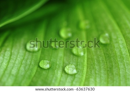 bright green leaf and water drop  close up - stock photo