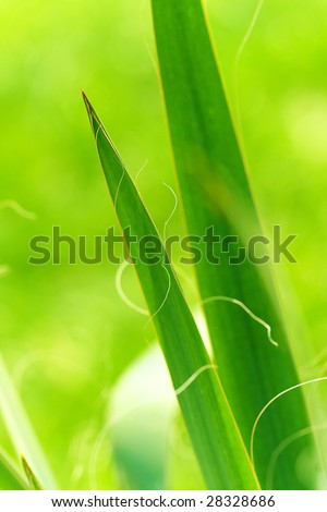 bright green leaves - stock photo