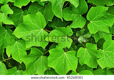 Bright green leaves texture background closeup - stock photo