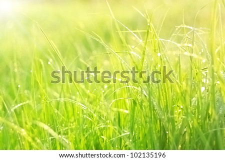 Bright green lush grass with dew drops - stock photo