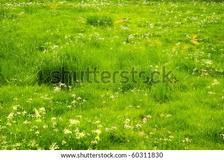 bright green meadows in spring