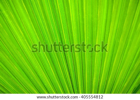 Bright green palm leaf surface close up texture background image
