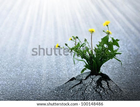 Bright hope of life. Plants have emerged trough asphalt and are reaching for the light.