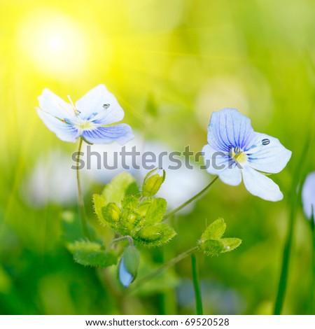 Bright image of little blue flower - stock photo