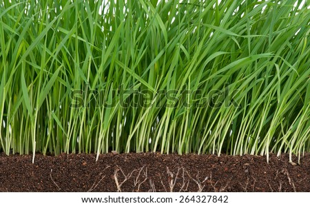 Bright juicy green grass with roots in the organic soil - stock photo