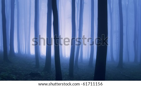 bright light in a elegant forest - stock photo