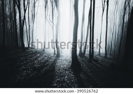 bright light in misty forest - stock photo
