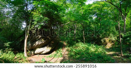 bright lights in the forest panorama - stock photo