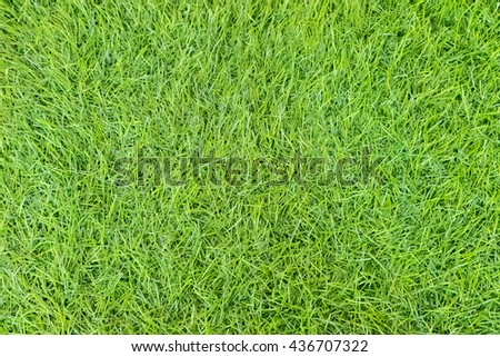 Bright long leave fake green grass lawn - Top view background - stock photo