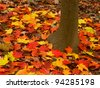 Bright maple leaves at Kishwaukee Gorge Forest Preserve of Illinois - stock photo