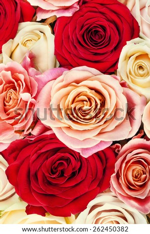 Bright multicolored bouquet of roses. Natural  flowers background - stock photo