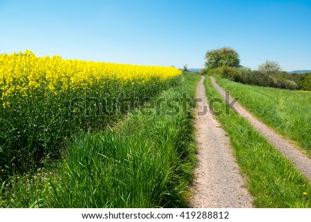 Bright oilseed rape field and rural road in the valley, Germany