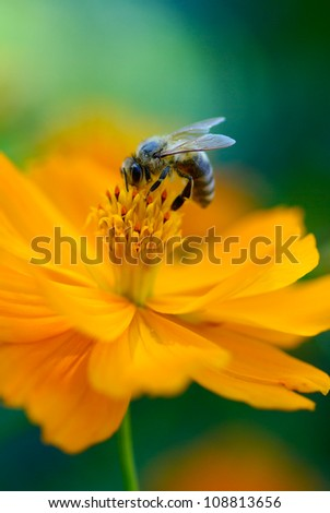 bright orange flower on a colorful blue-green background. soft focus photo - stock photo