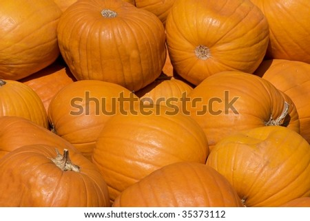 Bright orange pumpkins in a pile. Great for background