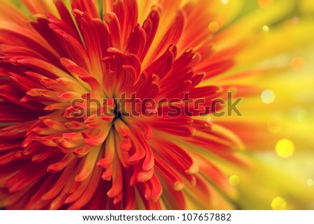 Bright orange-red flower close up - stock photo