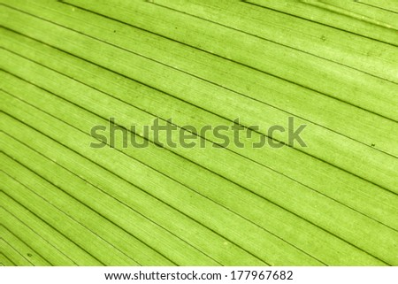 bright palm leaves texture in tropical garden - stock photo
