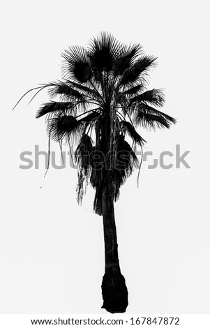 Bright palm tree isolated on white background - stock photo