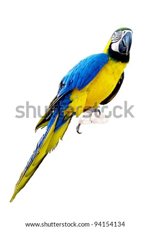 Bright parrot isolated on the white background - stock photo