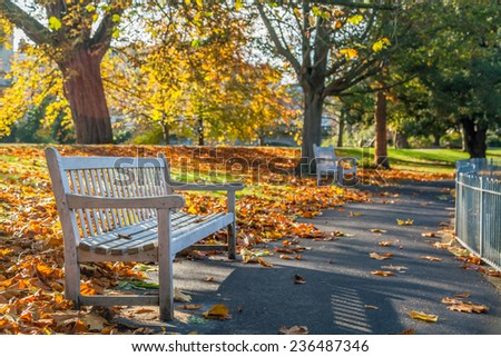 Bright photo of a bench in public garden in the autumn - stock photo