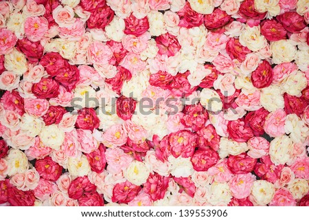 bright picture of background full of white and pink peonies - stock photo