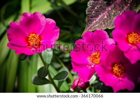 Bright Pink Flowers - stock photo