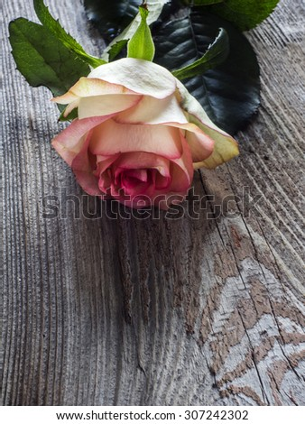 Bright pink rose on a vintage weathering wooden background, for wedding, greeting card and invitation card - stock photo
