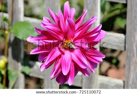 Bright purple flower standing against a wooden fence on a summer day