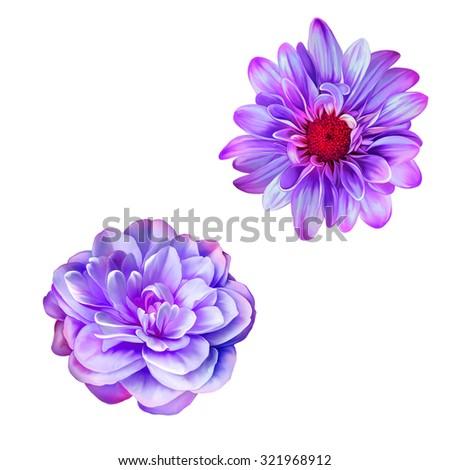 Bright purple Mona Lisa flower, Spring flower.Isolated on white background - stock photo