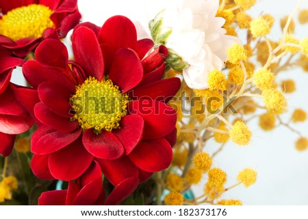 bright red daisy and mimosa twigs - stock photo