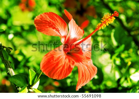 bright red tropical flower on a background a green vegetation - stock photo