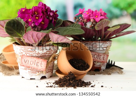 Bright saintpaulias and garden tools on natural background - stock photo