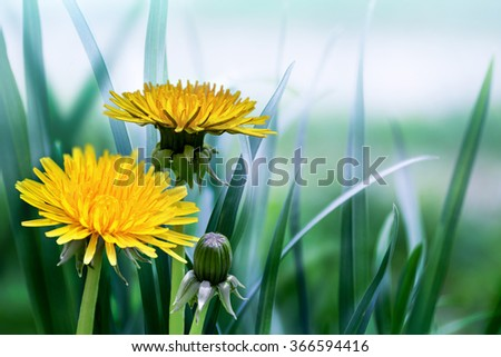 bright spring natural background with dandelions - stock photo