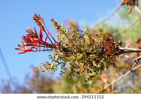 Bright spring twig - stock photo