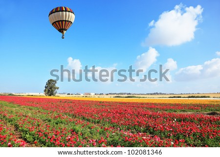 Bright striped balloon flies over a field of colorful garden of buttercups. Spring Day in Israel.