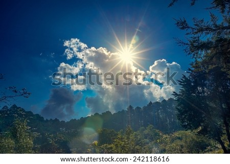 bright sun on blue sky dramatic illuminated Feather grass backlite by sun light - stock photo